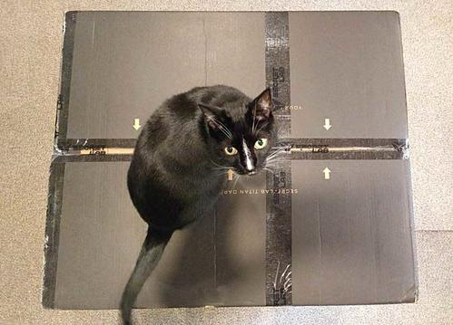 It came in a large box. Cat for scale.