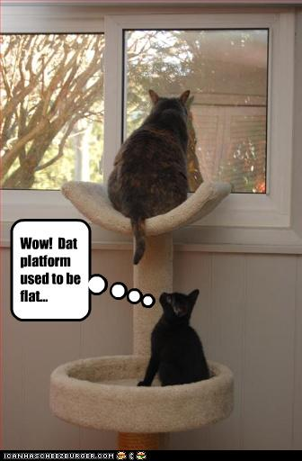 funny fat cat pictures. You are herefatcat